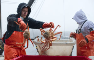 Ryan Westrope, left, and Carl Stepetin unload and sort tanner crab off the F/V Seaview at Taku Smokeries/Fisheries in downtown Juneau on Monday. The processing plant started receiving the first crab of the season last Thursday.